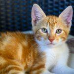 Killing i Kroatien / Kitten in Croatia