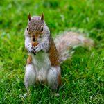 Egern i London